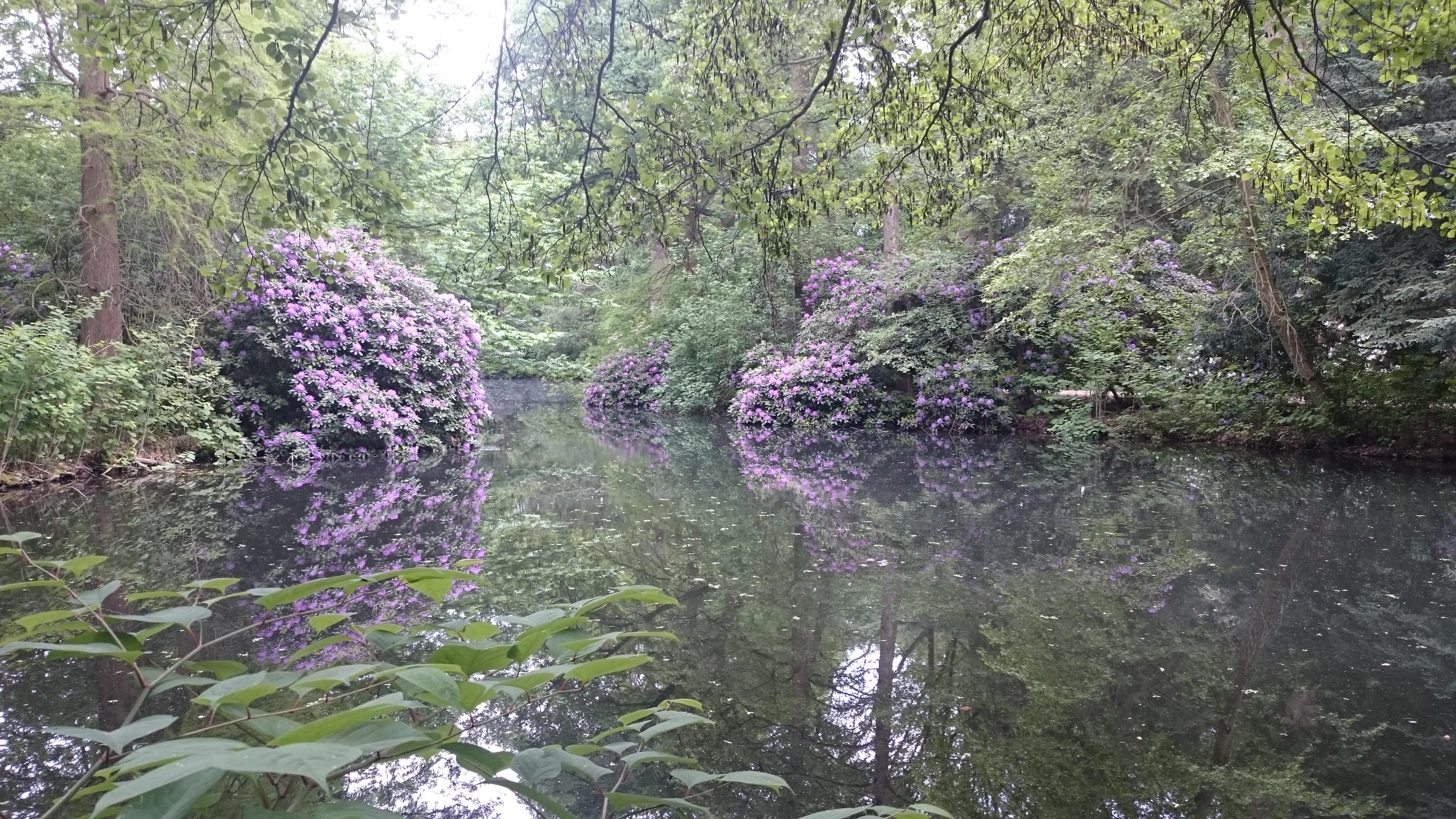 mhr Blütenmeer im Berliner Tiergarten